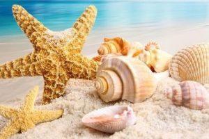 Shellsandstarfish